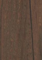 Морёная сосна